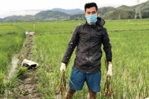 Amarjit Singh Kiyam helping his family in farming. (Photo courtesy: AIFF Media)